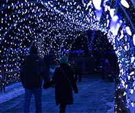 Lehigh Valley Zoo Winter Light Display